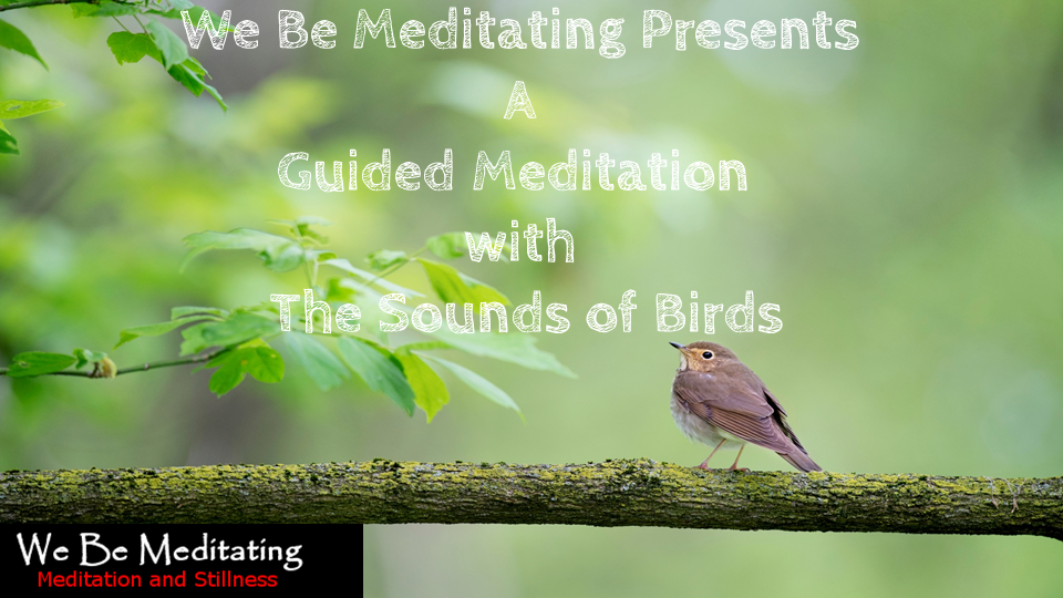 Guided Meditation with The Sounds of Birds